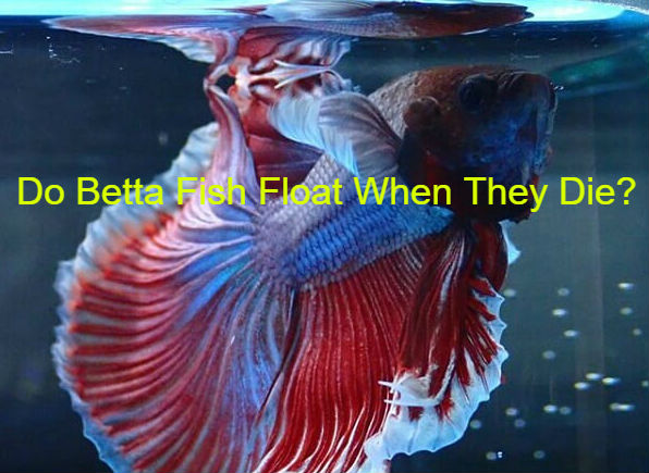 My fish dying keep why do betta Top 5